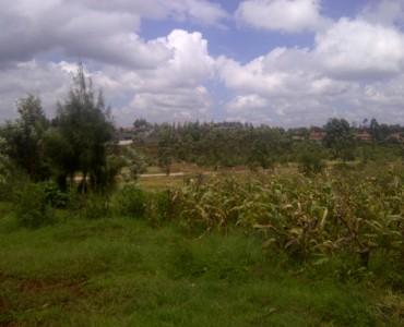 Runda Mumwe more pic (1)