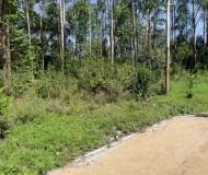 Kerarapon Half Acre (5)